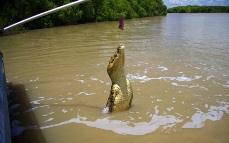 рыбак поймал крокодила