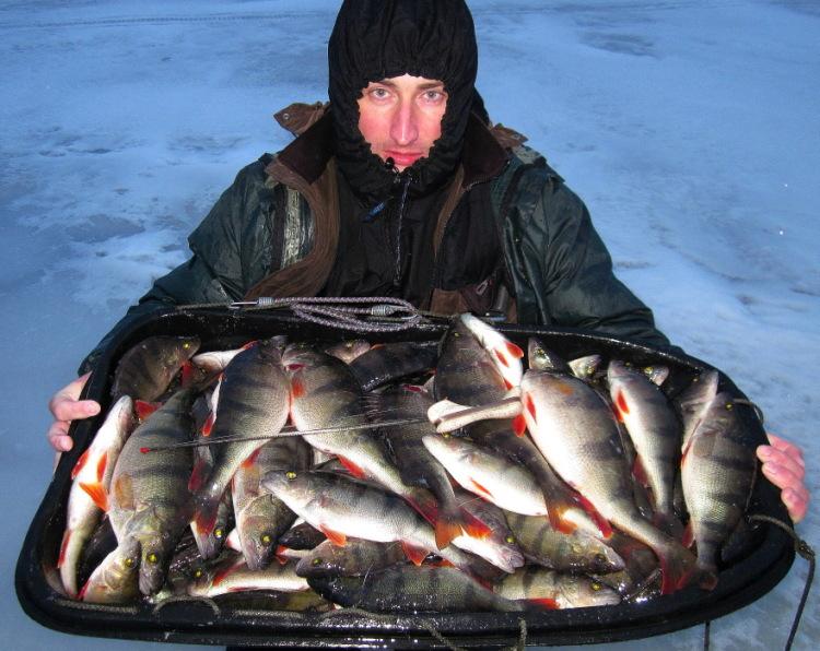 как ловить ладожского лосося